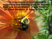 The importance of bumblebees in supporting biodiversity goes far beyond their role as pollinators of wild flowers. Dr Dave Goulson