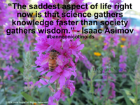 The saddest aspect of life right now is that science gathers knowledge faster than society gathers wisdom Isaac Asimov