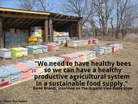We need to have healthy bees so we can have a healthy productive agricultural system. Gene Brandi