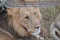 Canned hunting or trophy hunting facilities offer their customers the opportunity to kill exotic and native animals trapped