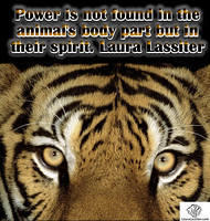 power is not found in the animal's body part but in their spirit Laura Lassiter