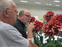 Judging at the Mid-Island Dahlia Society 2014 Competition