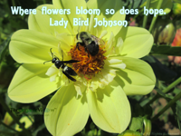 Where flowers bloom so does hope. Lady Bird Johnson