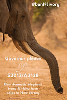 Please ban domestic elephant ivory and rhino horn sales in NJ