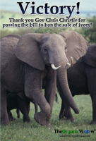Victory! Thank you Gov Chris Christie for passing the bill to ban the sale of ivory!