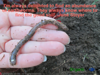 I'm always delighted to find an abundance of earthworms. They always know where to find the good soil June Stoyer