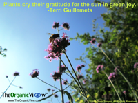 Plants cry their gratitude for the sun in green joy