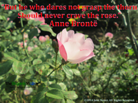 But he who dares not grasp the thorn Should never crave the rose Anne Bronte