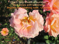 Each fairy breath of summer as it blows with loveliness inspires the blushing rose Unknown