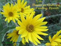 Flowers are God's way of smiling Proverb