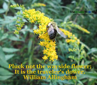 Pluck not the wayside flower; It is the traveler's dower. William Allingham