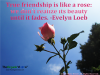 True friendship is like a rose we dont realize its beauty until it fades Evelyn Loeb