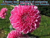 A flower does not think of competing with the flower next to it. It just blooms