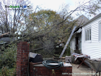 House damaged by tree from Hurricane Sandy