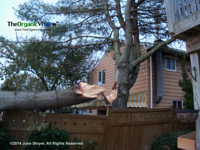 Huge tree branch on fence from Hurricane Sandy