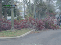Tree in street from Hurricane Sandy