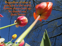 Regardless of what is going on in the world, flowers look up. So should you- June Stoyer