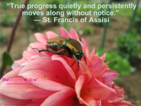 True progress quietly and persistently moves along without notice St Francis