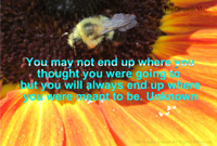 You may not end up where you thought you were going to but you will always end up where you were meant to be. Unknown