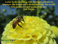 I arise in the morning torn between a desire to improve the world and a desire to enjoy the world.This makes it hard to plan the day. E B White