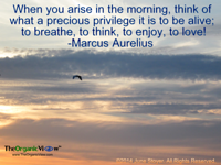 When you arise in the morning, think of what a precious privilege it is to be alive Marcus Aurelius