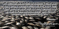 40 million dead fish in country that was only using neonicotinoids for 2000 km