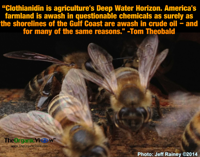 Clothianidin is agricultures Deep Water Horizon Tom Theobald