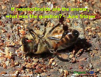 If neonicotinoids are the answer, what was the question -June Stoyer