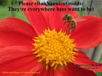 Please Ban Neonicotinoids They're everywhere bees want to be June Stoyer