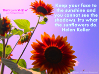 Keep your face to the sunshine and you cannot see the shadows. It's what the sunflowers do. Helen Keller