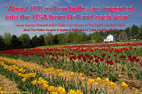 About 800 million bulbs are imported from Holland into the USA each year
