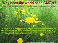 Why does the world need GMO's? June Stoyer