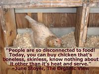 "People are so disconnected to food! Today, you can buy chicken that's boneless, skinless, know nothing about it other than it's heat and serve."" –June Stoyer"