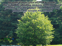 Imagine if trees gave off WIFI signals We would be planting so many trees and we'd probably save the planet!