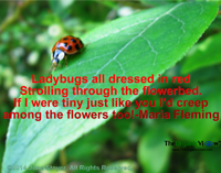 Ladybugs all dressed in red Strolling through the flowerbed. If I were tiny just like you